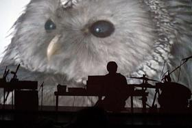 Klicka på bilden för en större version.  Namn:bird.jpg Visningar:130 Storlek:44,8 KB Id:40665